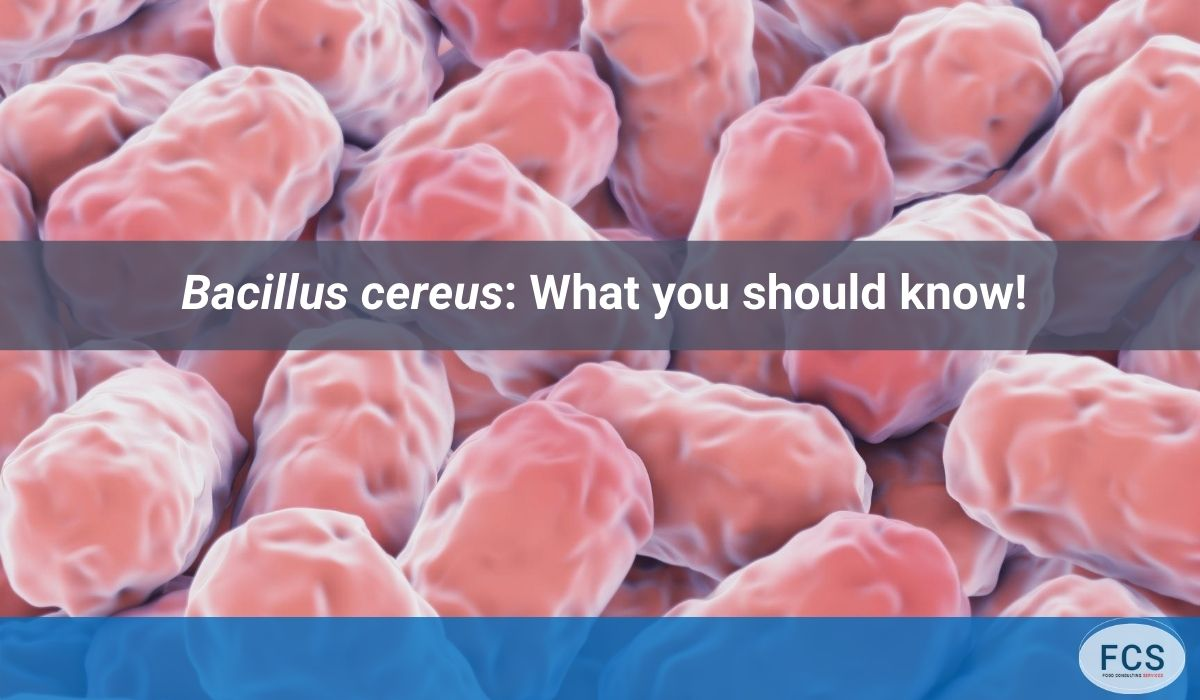 Bacillus cereus What you should know!